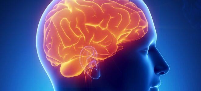 Какие бывают мозговые паразиты, опасность для человека