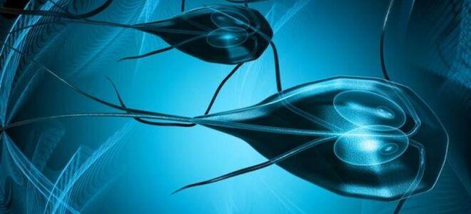 Что такое лямблиоз, симптомы и лечение заболевания у взрослых