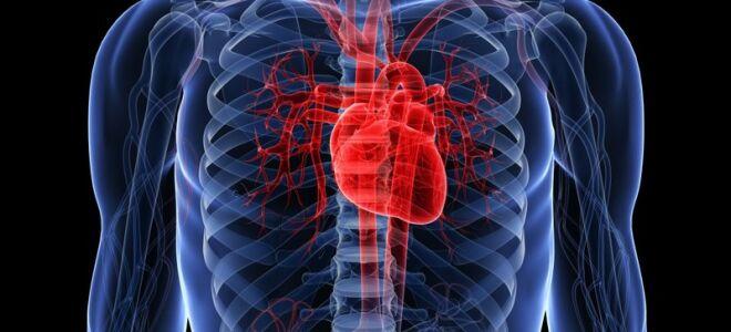 Какие сердечные черви могут быть у человека?