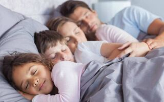 Кто такие постельные блохи, чем они опасны и как от них избавиться