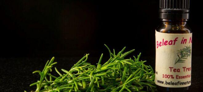 Масло чайного дерева: применение при грибке ногтей