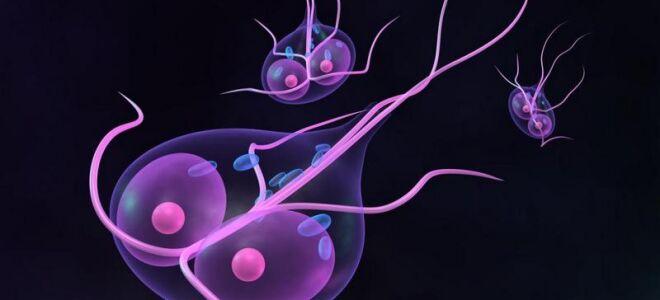 малышева о паразитах в организме человека видео