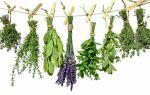 Травы для повышения иммунитета взрослых