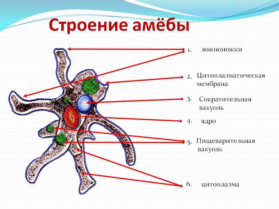 организм где живет паразит