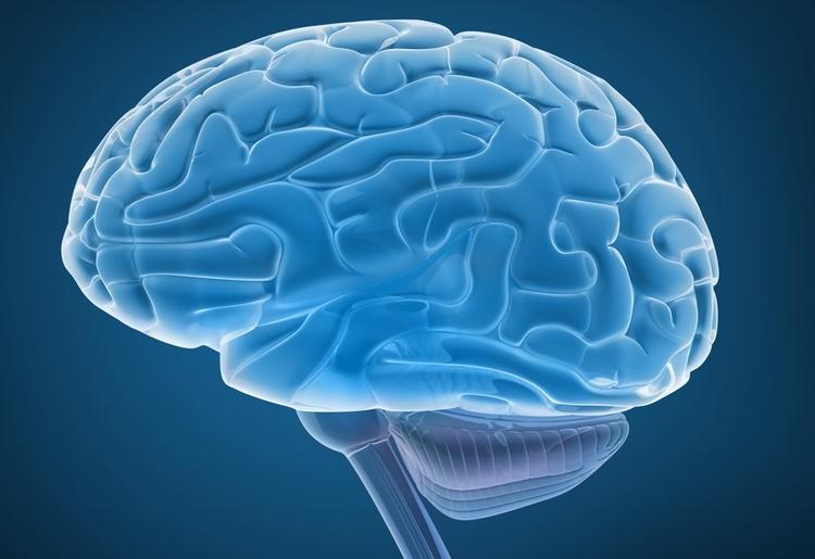 parazity-v-mozgu-cheloveka-02