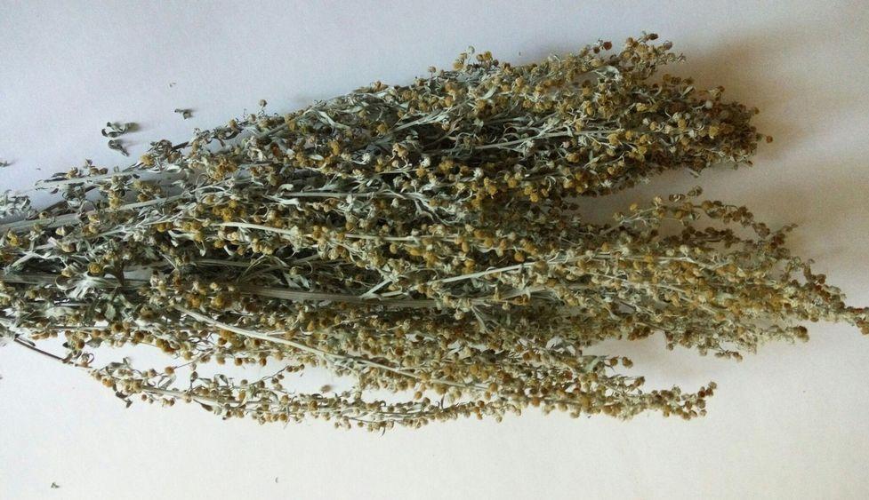 трава полынь от паразитов