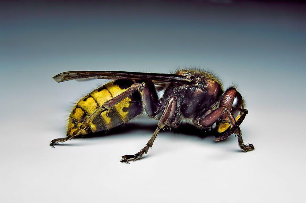 paraziti-v-organizme-cheloveka-02