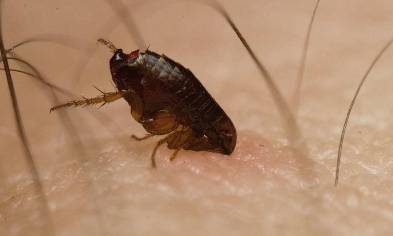 какие паразиты опасны человека